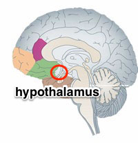 hypothalamus-hormonal-balancing