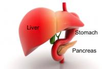Hormonal balancing -Pancreas