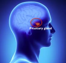 Hormonal balancing - Pituitary gland infographics