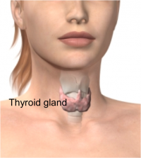 Hormonal balancing -Thyroid gland