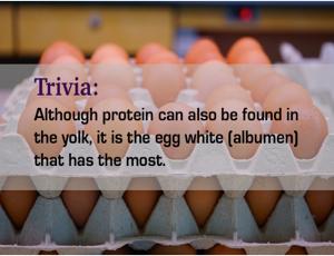 eggs- energy boost alternative medicine practitioner brisbane