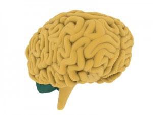 modern-day-stress-brain-alternative-medicine-practitioner-brisbane