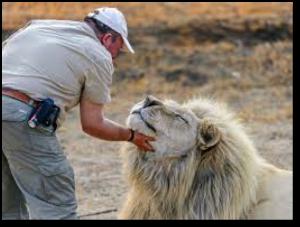 wealth-lion-beyondgoodhealth