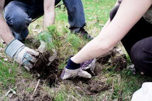 payitforward-planting-beyondgoodhealth