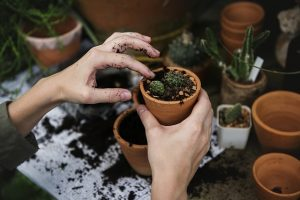 giving-plant-beyondgoodhealth