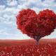 givingtree-beyondgoodhealth