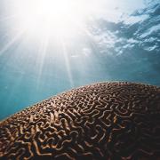 brain-reprogramming-beyondgoodhealth